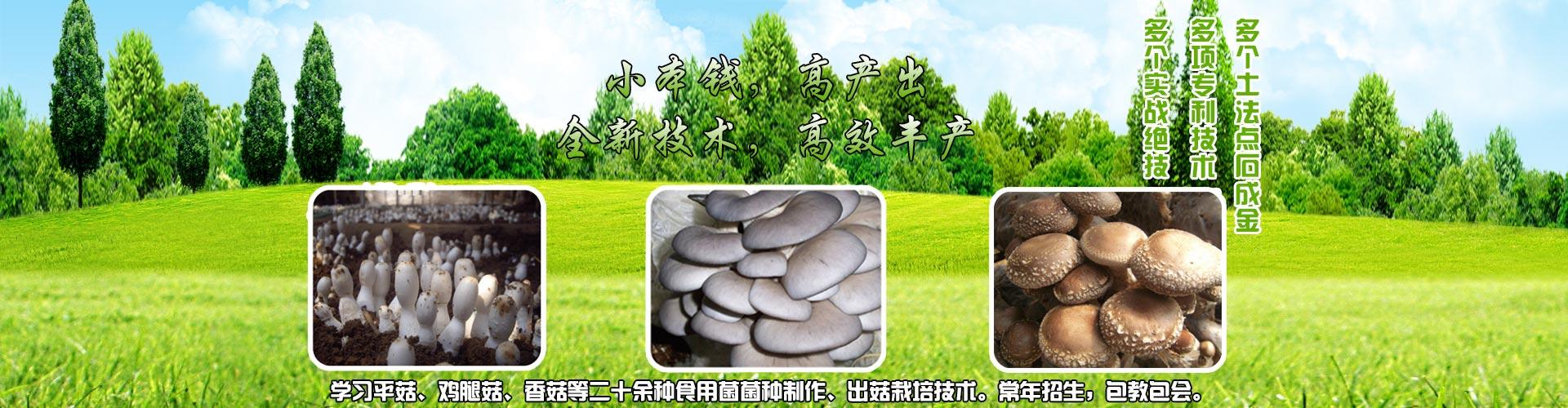 食用菌種植技術培訓|蘑菇種植技術|致富技術培訓|阜陽菇豐食用菌科技有限公司